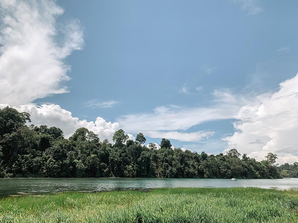11-km trail at MacRitchie Reservoir Park Singapore