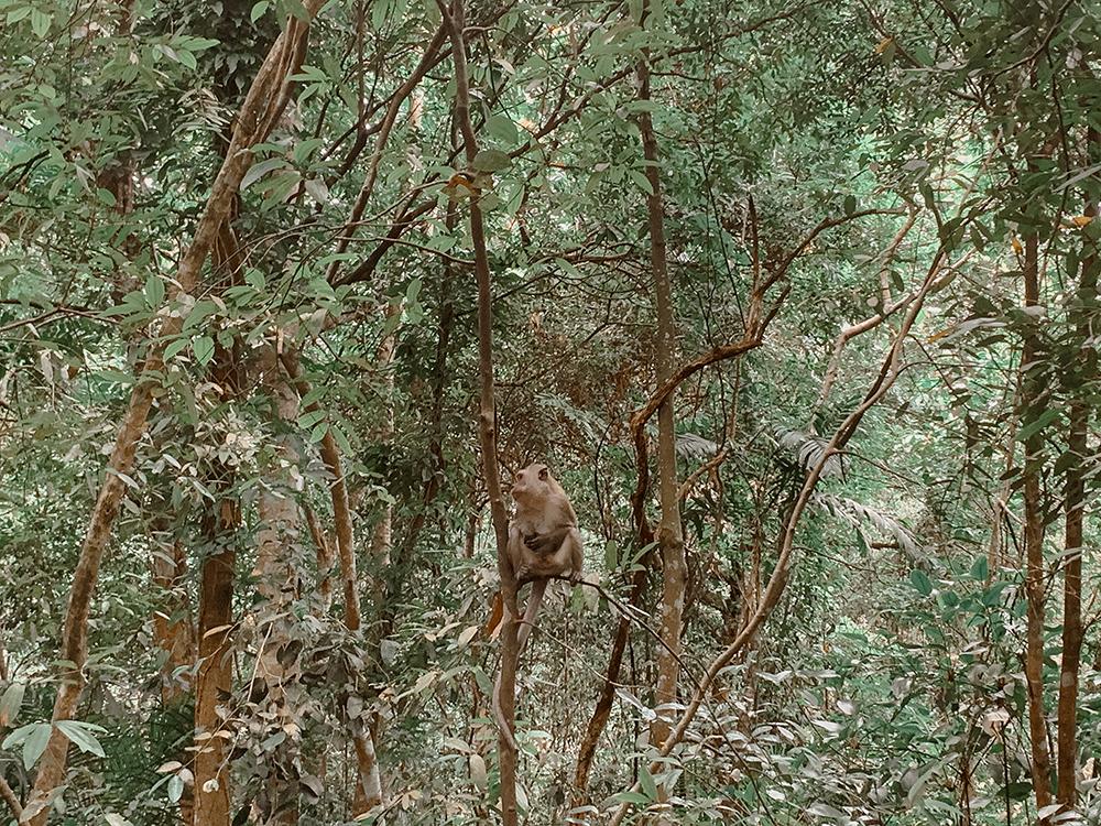 Monkey in MacRitchie Reservoir Park
